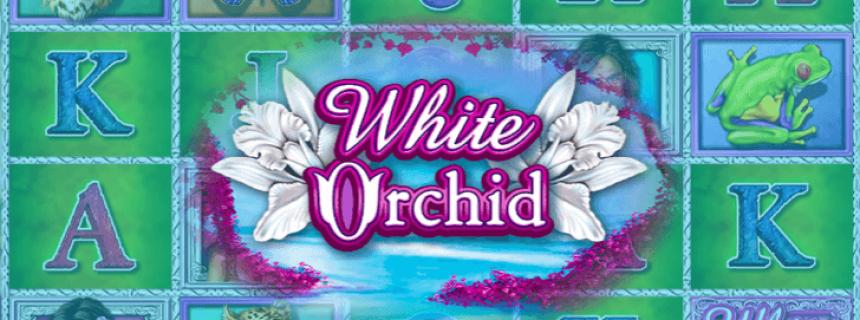 สล็อต White Orchid เล่นลุ้นรวย
